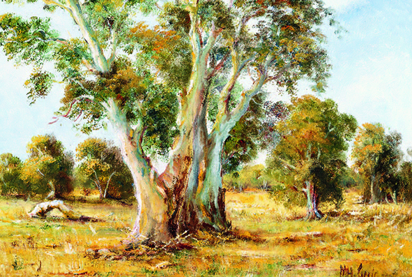 523_OLD RED GUM NEAR MEDGEE_M.Greig-01