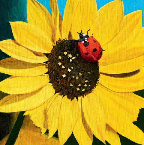 Beetle and Sunflower